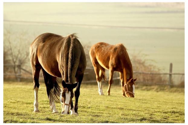 Southern Subtropics Horse Pasture
