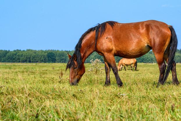 Southwest Desert Horse Forage Blend