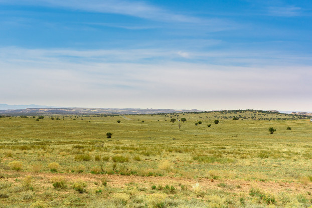 Southwest Desert Wildfire Resistant Blend