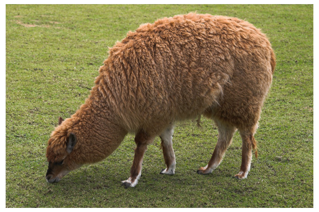 Southwest Desert Alpaca/Llama Pasture