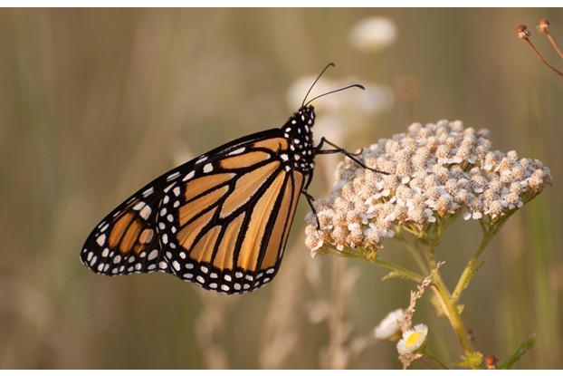 Southwest Desert Pollinator Blend