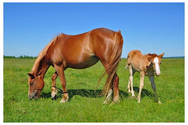 Southwest Semi-Arid Steppe Horse Pasture