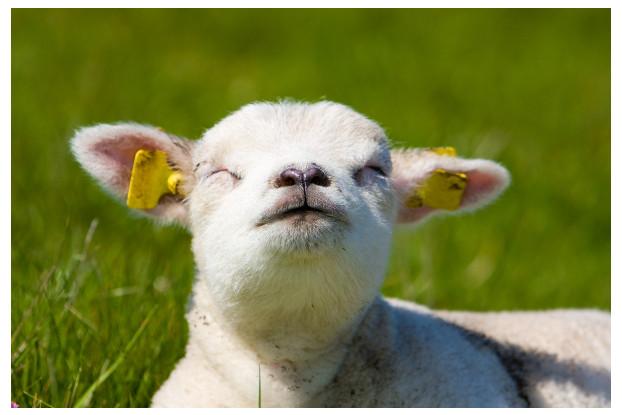 Southwest Semi-Arid Steppe Sheep Pasture