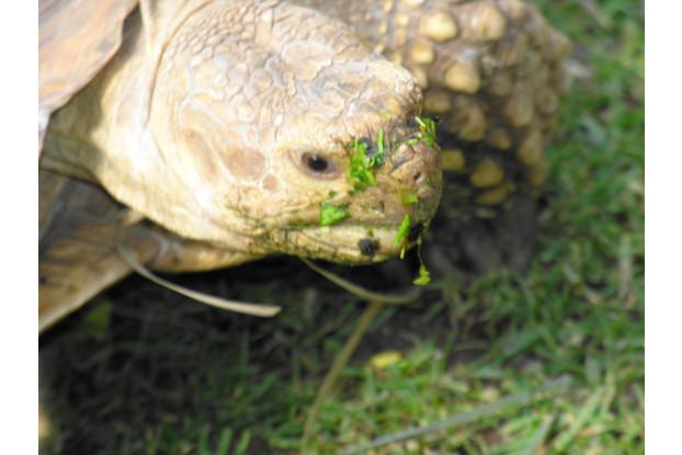 Tortoise Forage Blend