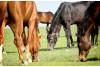 Florida Tropics Horse Pasture