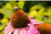 Florida Tropics Pollinator Blend