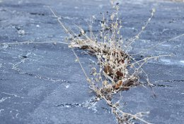 dead weeds by Monik Markus