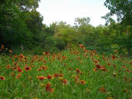 firewheel meadow by gurdonark