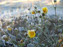 frosty wildflower by Dawn Endico