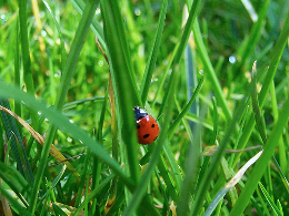 ladybug in grass by Jörg Kanngießer