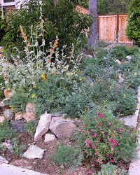 native plant garden by M Dolly