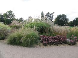 ornamental grass by Leonora Enking
