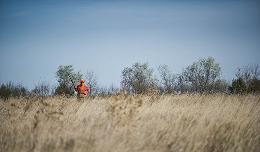 pheasant habitat by nicholasputz