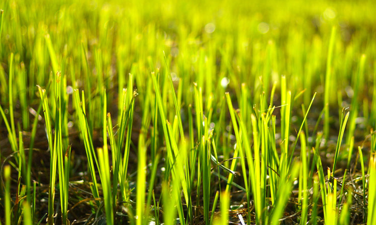 How to choose the right grass seed for a thriving lawn