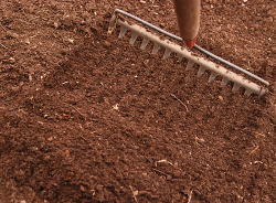 raking in seed