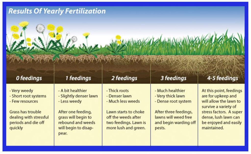 The A Z Guide To Fertilizing New Gr Seeds For Lush Lawn