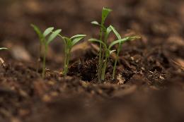 seedlings by Derek Bridges