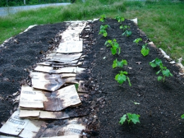 sheet composting by fireonthehill