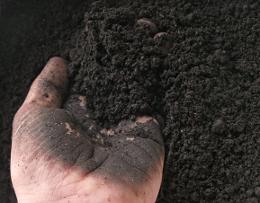 soil high in organic matter