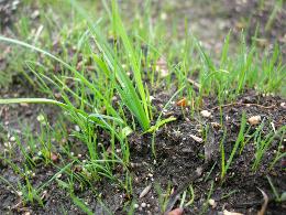spring grass by Dan McKay