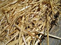 straw mulch1 by stellar678