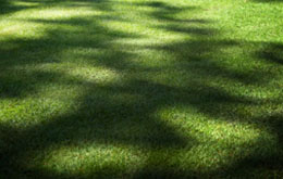 sun and shade on lawn