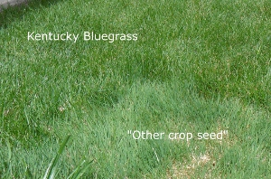 two different grasses