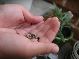 wildflower seed in hand by lovelihood