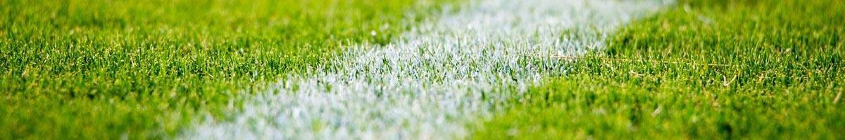 Best Grass Seed Choices for Athletic Fields