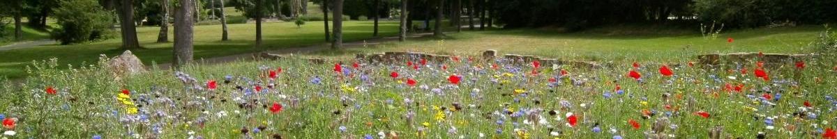 Penstemons: Summer's Favorite Flowers