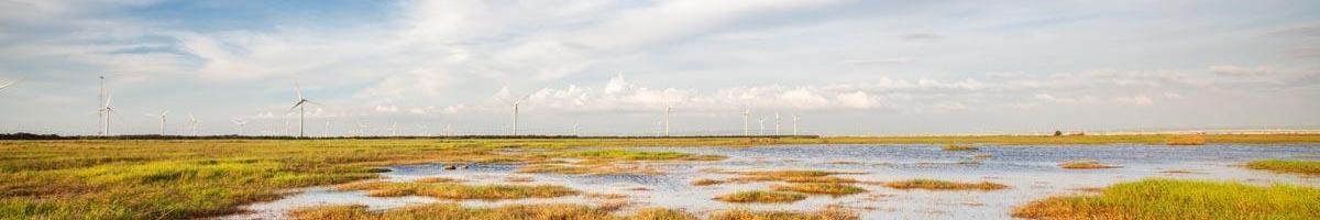 Stop Wetland Destruction: Avoid Peat Moss When Germinating Grass Seed