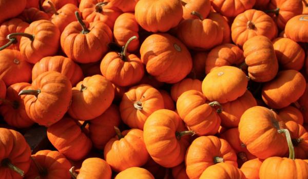6 Ways to Recycle Your Halloween Pumpkins: