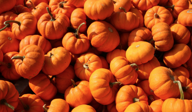 6 Ways to Recycle Your Halloween Pumpkins: