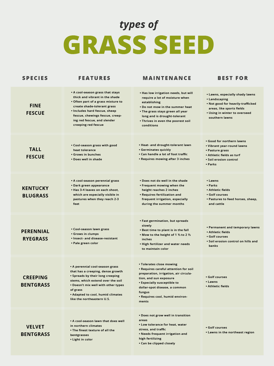 GREEN - Unique Formula Stays Green in all Weather Conditions Grass Seed SO