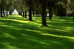 Shade Tolerant Grass