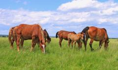 Great Plains Horse Pasture