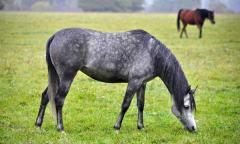 Pacific Northwest Horse Pasture